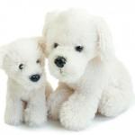 Preise für Arbeitsbekleidung T-Shirts und weißer Hund von Busitex
